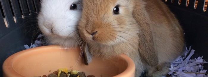 ark-veterinary-practice-rabbits-pet-advice.jpeg